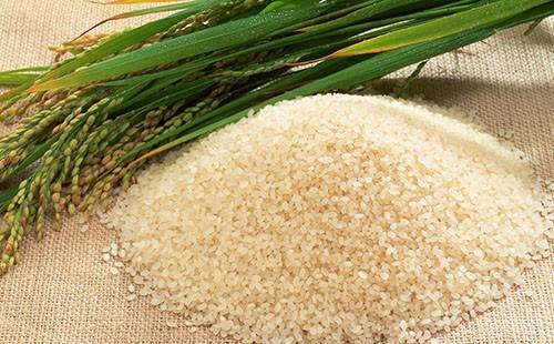 Зелёные колосья риса и горка зёрен