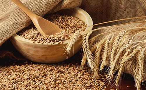 Как варить пшеничную кашу на молоке 🥝 сколько варится пшеничка, приготовление