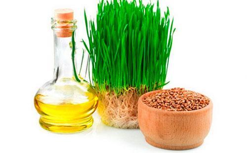 Проросшая пшеница и масло из нее