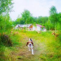 Весёлый пёсик бежит общаться с фотографом