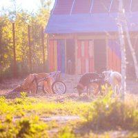Игры в лучах осеннего солнца
