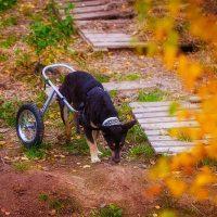 Чёрный пёс на осенней траве
