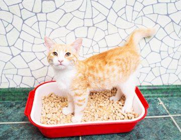 Как убрать запах кошачьей мочи в квартире: чистим линолеум, ковер, диван, матрас, одежду и обувь