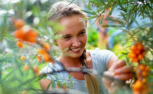 Девушка собирает с куста ягоды