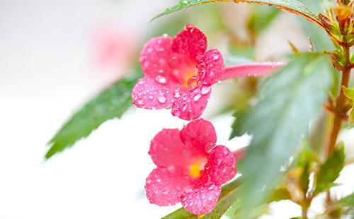 Цветы с капельками росы на лепестках