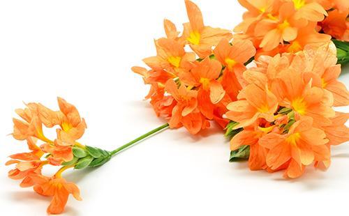 Кисть оранжевых цветов на белом фоне
