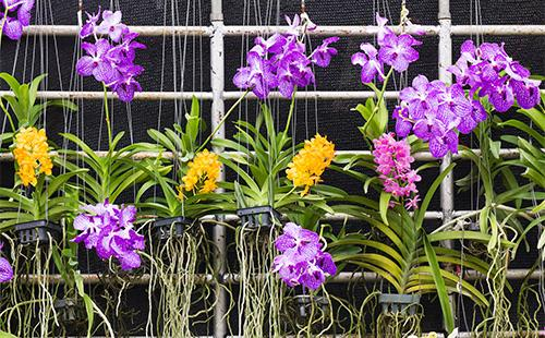 Орхидеи висят на сетке
