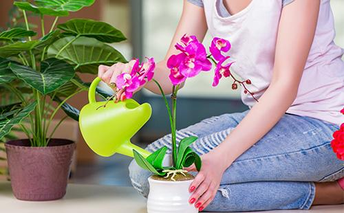 Женщина поливает орхидею