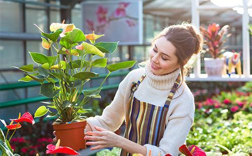 Красивая девушка держит вазон с антуриумом