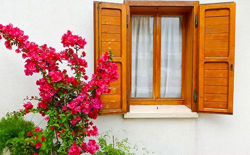 Бугенвиллия возле окна