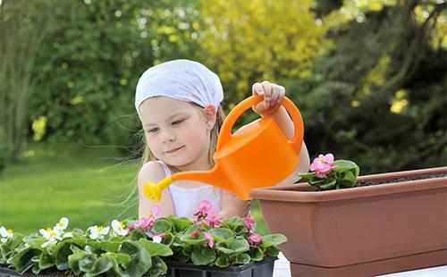 Девочка поливает горшки с бегонией