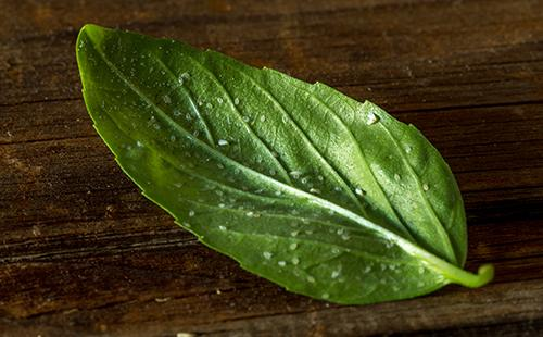 Белокрылка на листке