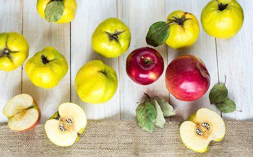 Красные яблоки и жёлтая айва на столе