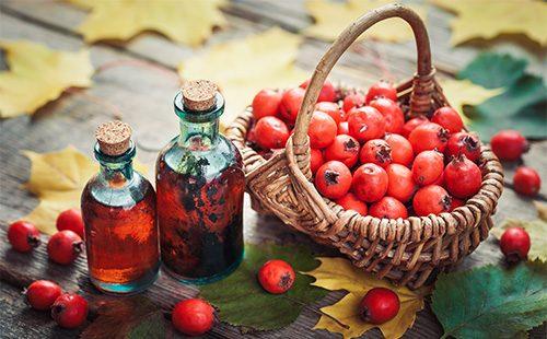 Плоды шиповника и масло из них