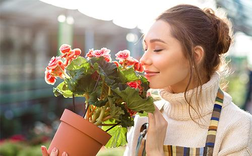 Женщина вдыхает аромат цветов бегонии