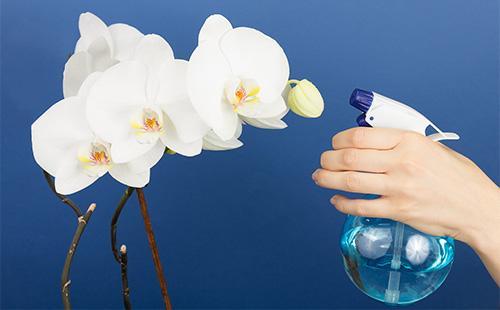 Опрыскивание цвеитов орхидеи