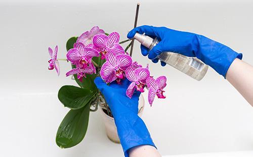 Удобрение орхидей по листку