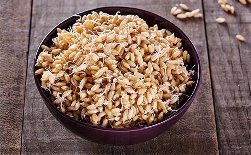 Проросшие зерна пшеницы в тарелке