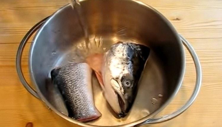 Для приготовления бульона можно использовать голову и хвост рыбы.