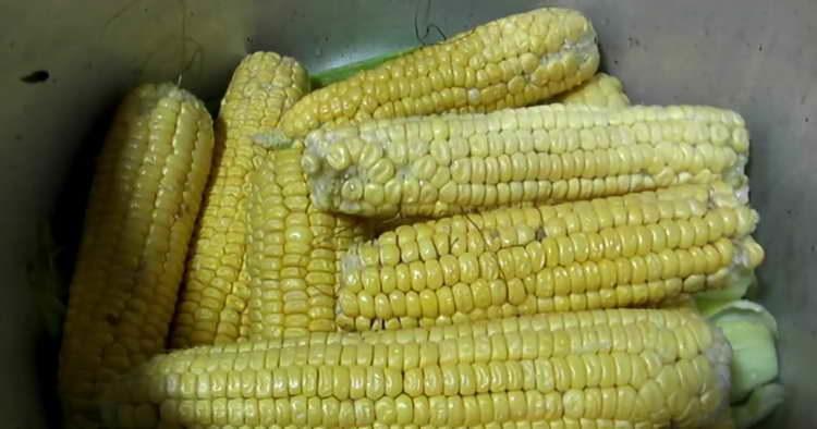 чистим кукурузные початки